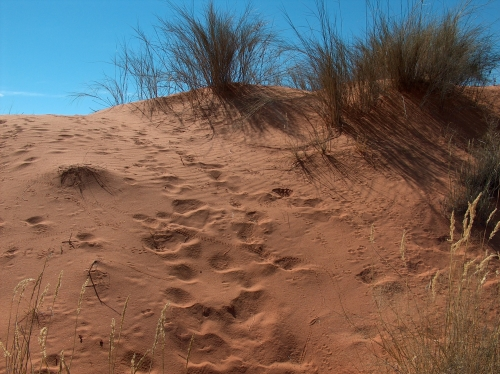 Animal Spoor in the sand - Karoo