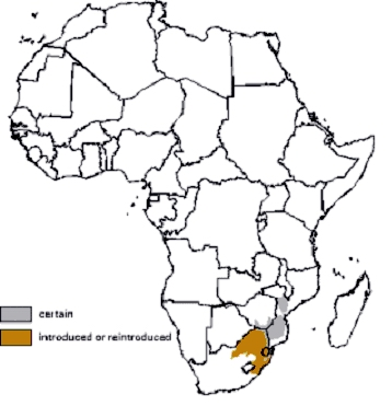 Nyala Distribution